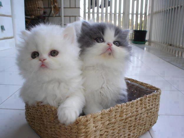 Picture of 2 cute kitens sitting in a basket.